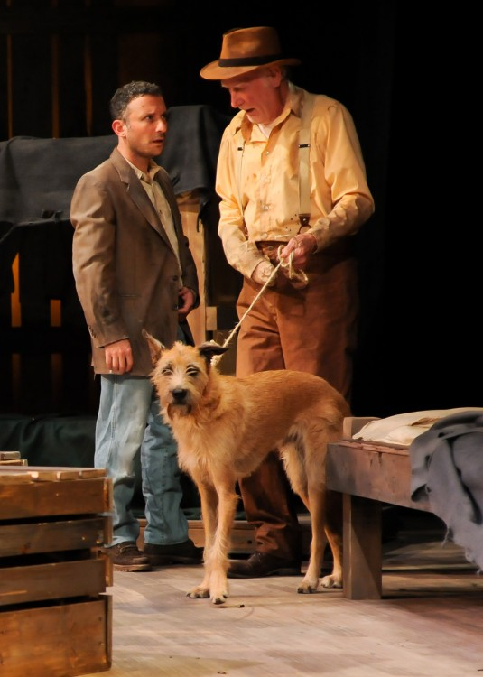 comparing candys dog and lennie in For instance, only after slim agrees that candy should put his decrepit dog out of its misery does the old man agree to let carlson shoot it a quiet, insightful man, slim alone understands the nature of the bond between george and lennie, and comforts george at the book's tragic ending.