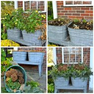 Winter Displays in Summer Containers