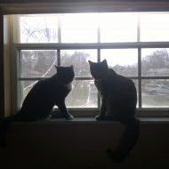 Tidy Kittens