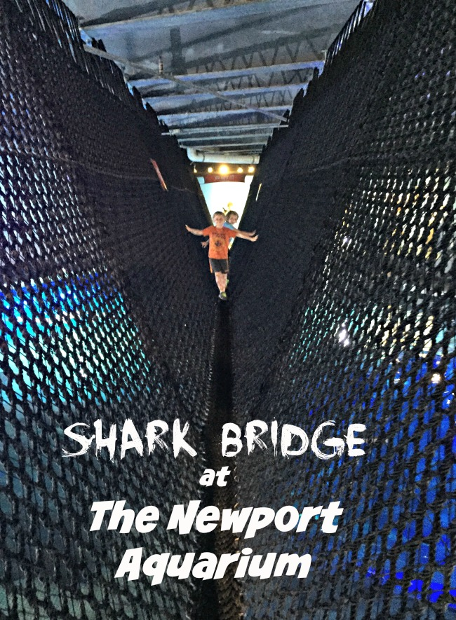 sharkbridge3