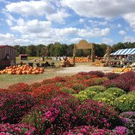 Blooms and Berries Fall Fest in Loveland Ohio